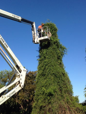 Riverina Tree Care